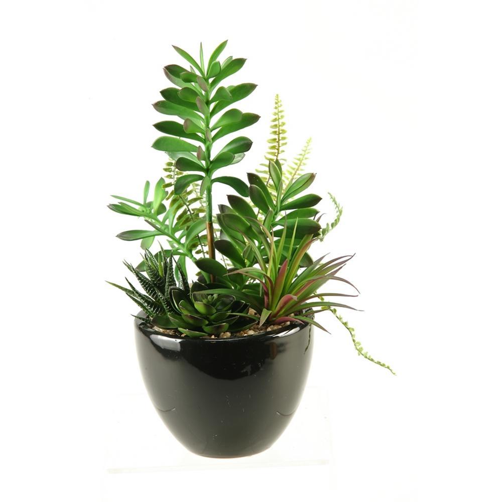 Indoor 14 in. Succulent, Aloe and Echeveria in Round Ceramic Planter