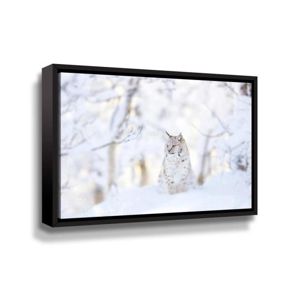 ArtWall Snow Lynx' by PhotoINC Studio Framed Canvas Wall Art 5pst240a2436f