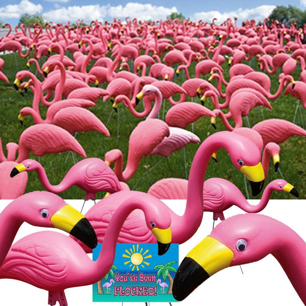 Bloem Pink Flamingo (50-Pack)