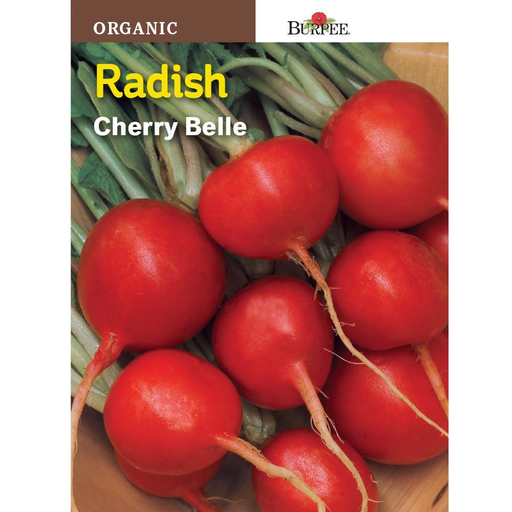 /'Cherry Belle/' Radish Seeds