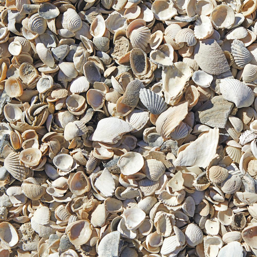 0.5 Cu. Ft. Sea Shells-54175
