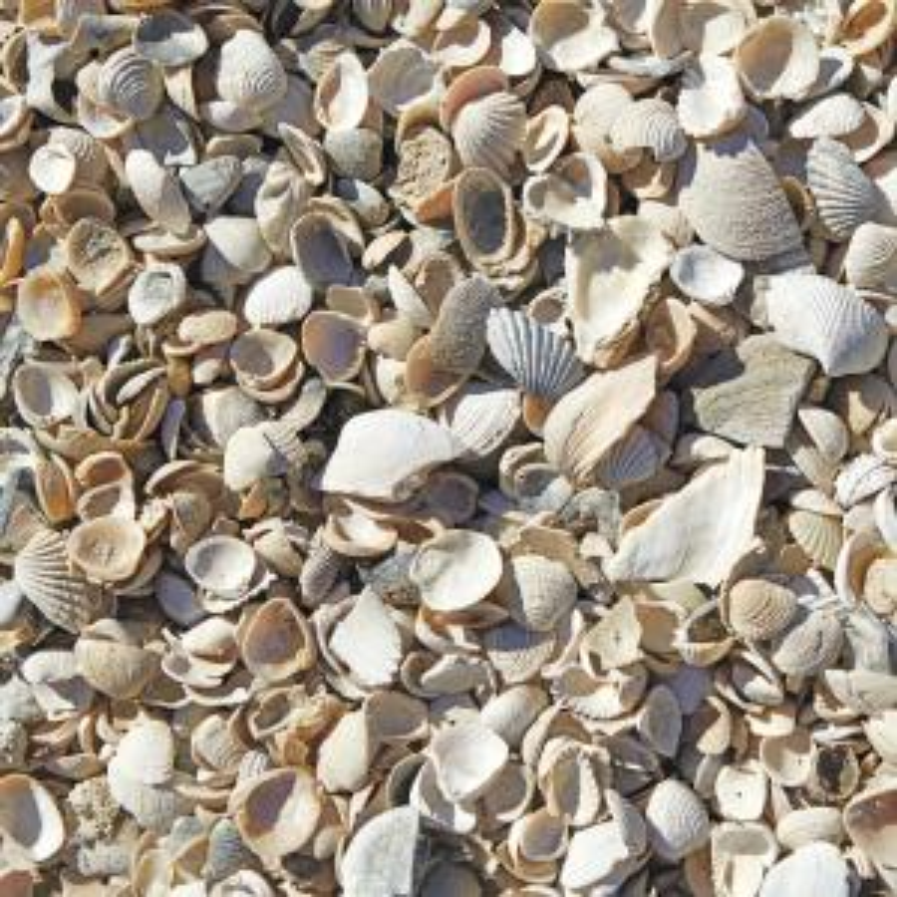 0 5 Cu Ft Sea Shells 54175 The Home Depot