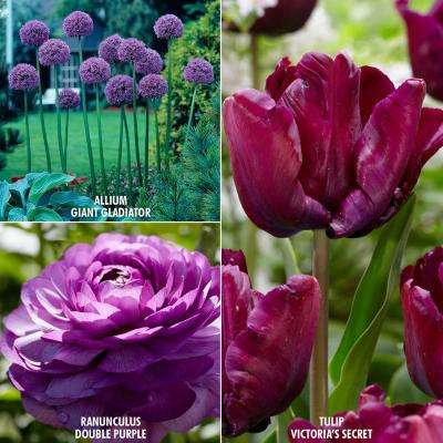 Color Your Garden Purple Bulbs Collection (Set of 27)