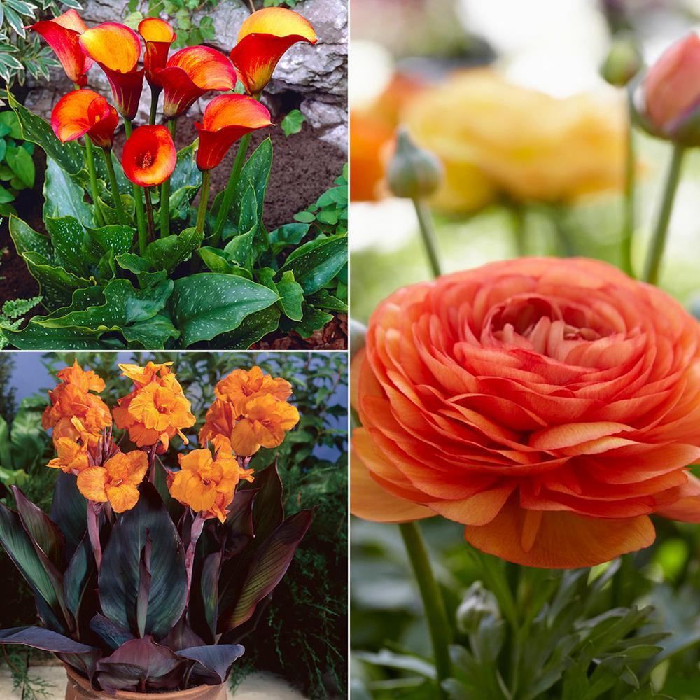 Color Your Garden Orange  Collection  Bulbs (36-Set)