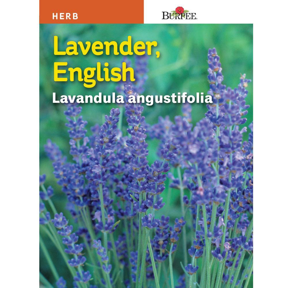 Burpee Lavender True Seed