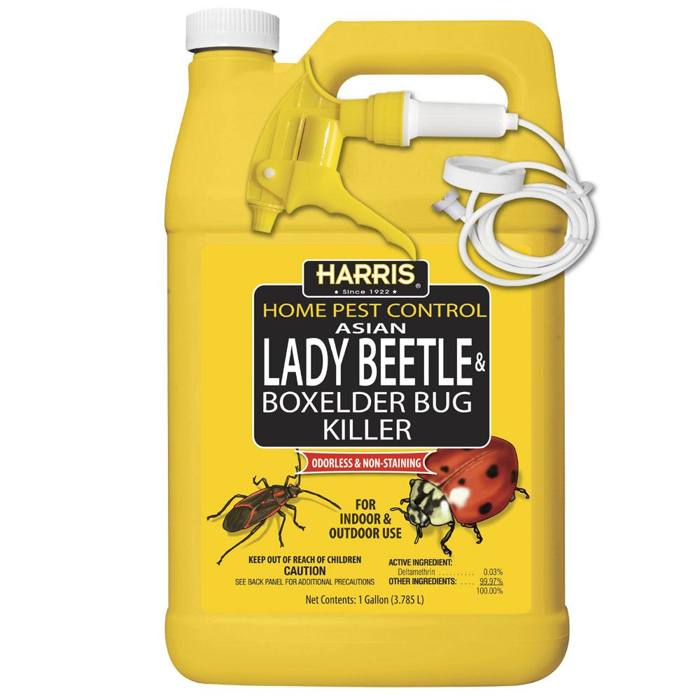 Harris 1 Gal Asian Lady Beetle And Box Elder Bug Killer Hbxa 128