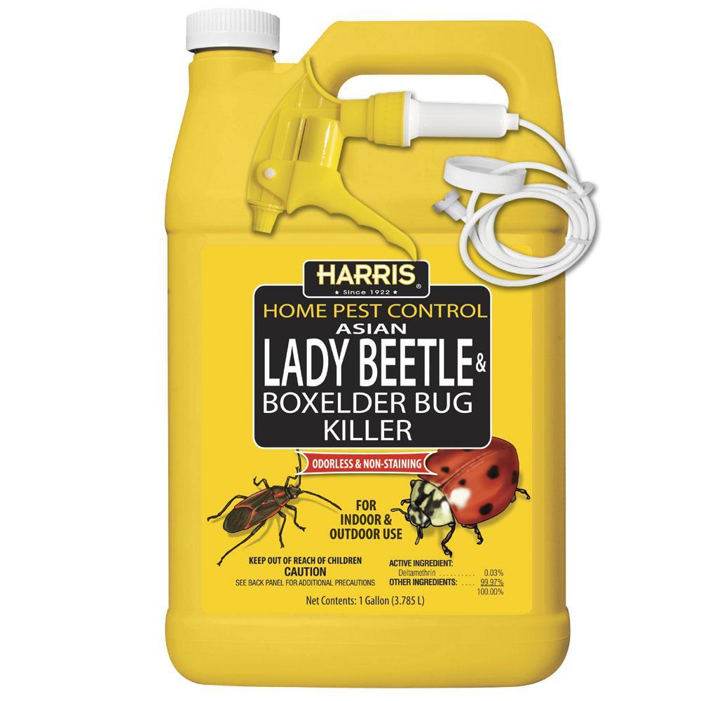 Asian ladybeetle spray