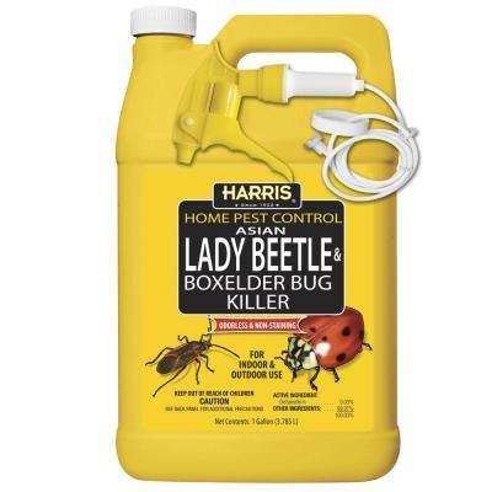 1 Gal. Asian Lady Beetle and Box-Elder Bug Killer