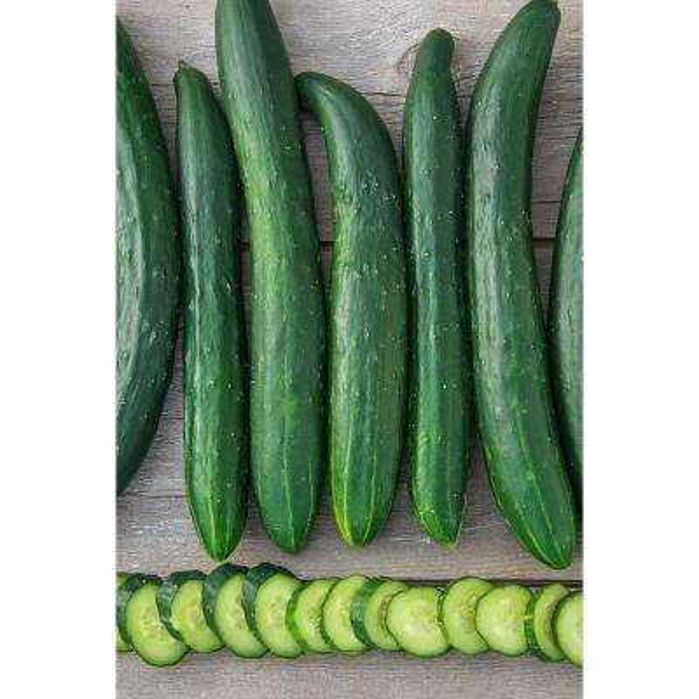 Cucumber Tasty Green Hybrid (25 Seed Packet)