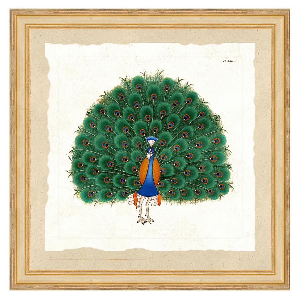 Vintage Print Gallery Exotic peacock IIFramed Archival Paper Wall Art (26 in. x 26 in. Full Size), Multi-Colored was $210.16 now $133.69 (36.0% off)