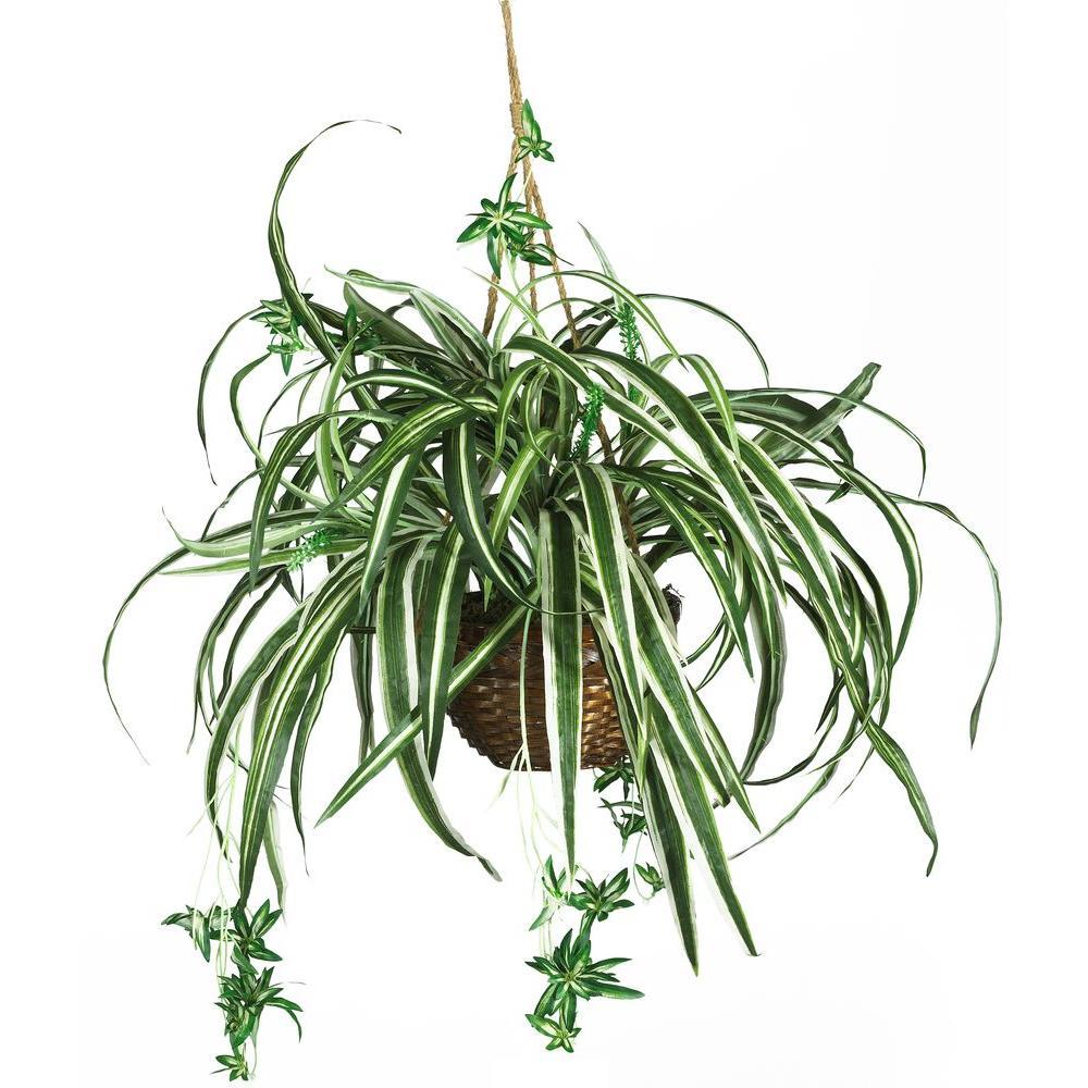 27 in. Silk Spider Plant Hanging Basket