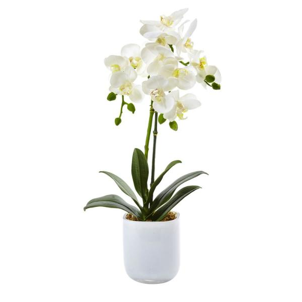 18.5 in. Phalaenopsis in Frosted Glass