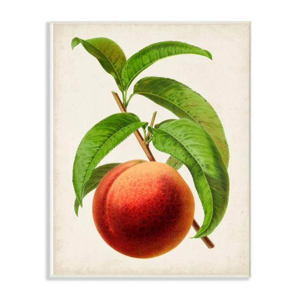 Stupell Industries 10 In X 15 In Quot Vintage Fruit Peach